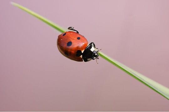 Les 100 plus belles photos animalières de l'année - Page 2 Coccinelle-406272