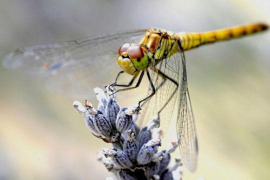Les 100 plus belles photos animalières de l'année - Page 2 Atterrissage-406280