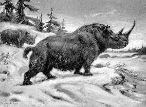 dessin du rhinocéros laineux.