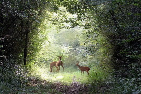 u00c0 l'orée du bois La campagne française au fil des saisons Linternaute # L Orée Du Bois Le Muy
