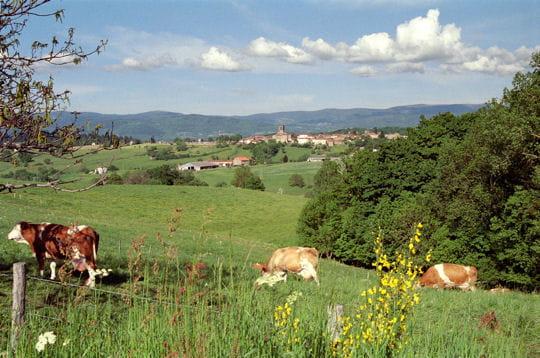 http://www.linternaute.com/nature-animaux/magazine/photo/tour-de-france-des-parcs-naturels-regionaux/image/parc-naturel-regional-livradois-forez-439444.jpg