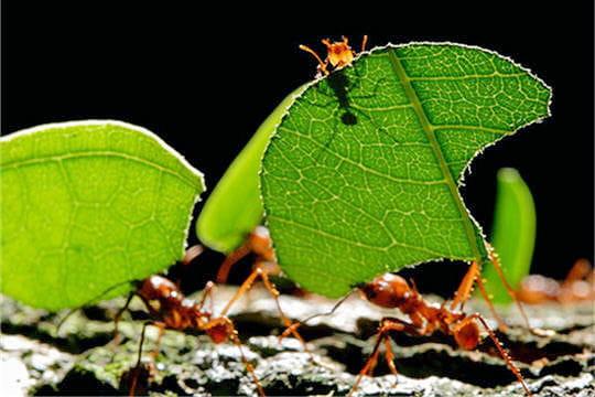 Fourmi - Animal qui mange les fourmis ...