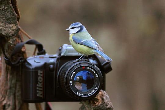 oiseau-photographe-450988