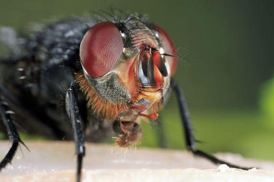 http://www.linternaute.com/science/biologie/photo/tete-a-tete-avec-les-insectes/image/mouche-463767.jpg