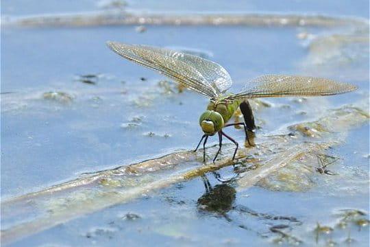 http://www.linternaute.com/nature-animaux/magazine/photo/le-petit-monde-animalier-de-gilles-vare/image/libellule-464922.jpg