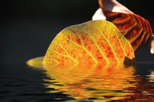 L 39 eau miroir des beaut s naturelles linternaute for Miroir de l eau