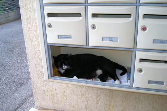 boite a lettre avec son chat de garde le blog de annie. Black Bedroom Furniture Sets. Home Design Ideas