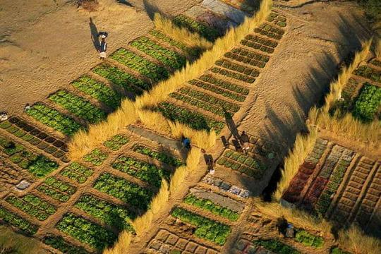 un jardin en afrique