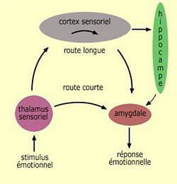 le cerveau agit face aux stimuli sensoriels perçus.