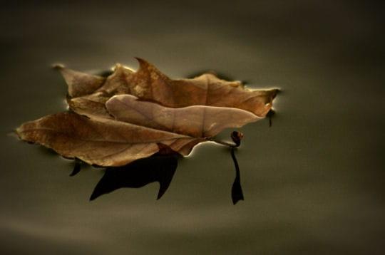 http://www.linternaute.com/nature-animaux/magazine/photo/l-automne-dans-la-nature/image/feuille-morte-495784.jpg