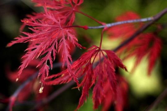 automne rouge en belgique l 39 automne dans la nature linternaute. Black Bedroom Furniture Sets. Home Design Ideas
