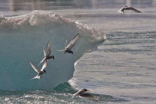Résultat d'images pour images danses sur glace