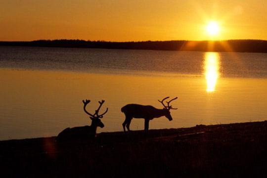 Laponie le royaume des neiges - Coucher du soleil rennes ...