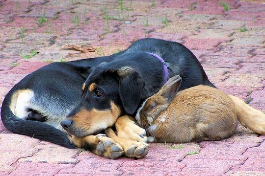 chien et lapin