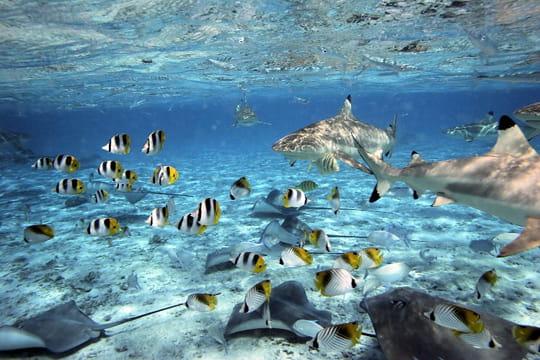 la richess des fonds sous-marins   le paradis de la polyn u00e9sie fran u00e7aise