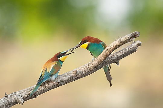 secrets photographes animaliers