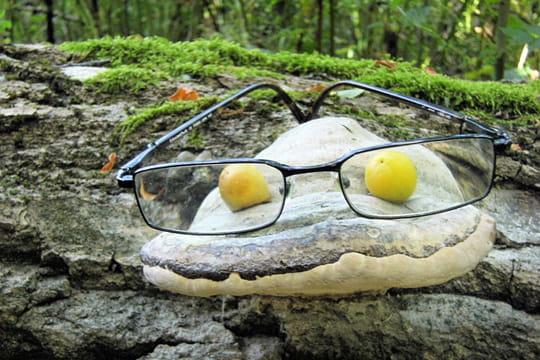 drôle de champignon à  lunettes