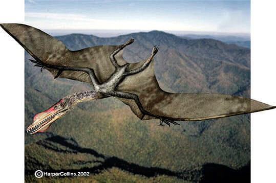 Survol pour rep rer une proie le monde perdu des - Jeux de dinosaure volant ...
