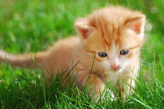 chat dans l 39 herbe 100 fonds d 39 cran pour accueillir le printemps linternaute. Black Bedroom Furniture Sets. Home Design Ideas