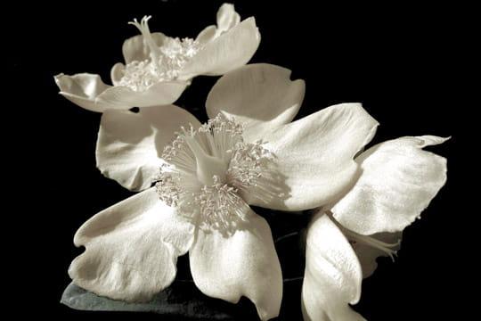 Blanc sur noir - Fonds d'écran nature - L'Internaute Photo numérique