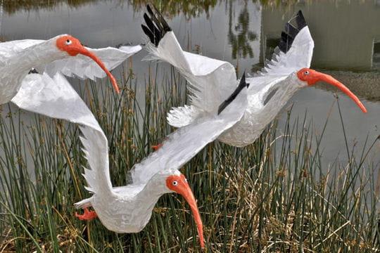 trio d'ibis