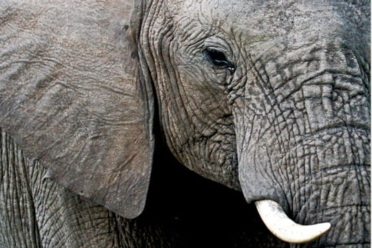 عکس فیل ماده