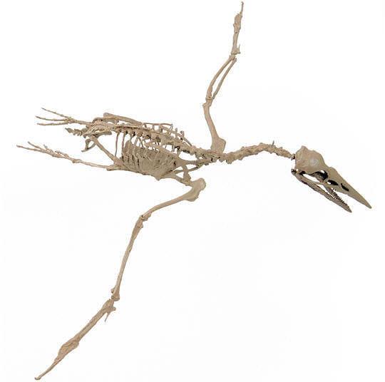 Des dinosaures volants plumes dans l 39 ombre des - Dinosaur volant ...