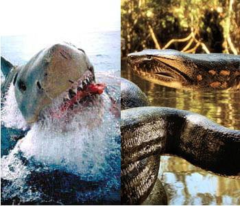 Requin g ant contre anaconda le grand match des monstres du cin ma linternaute - La cuisine du monstre tours ...