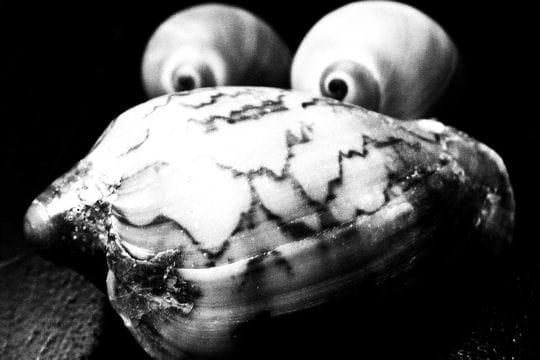 Mollusque inquiétant