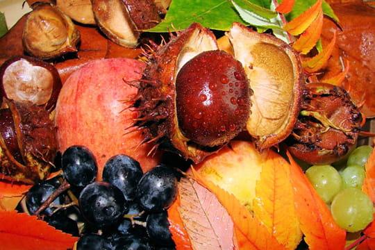 fruits et feuilles de saison l 39 automne se profile admirez ses couleurs linternaute. Black Bedroom Furniture Sets. Home Design Ideas