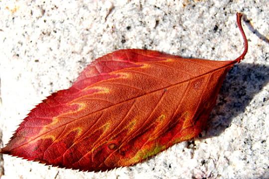 plus-belles-feuilles-l-automne-658422