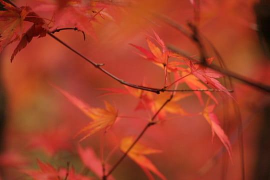 658512-rouge-est-la-couleur-de-l-automne