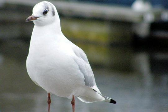 Rencontres ornithologiques bretonnes