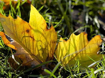 le tapis des feuilles mortes l agenda nature du mois de novembre linternaute
