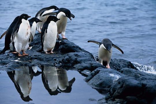 Manchots, Antarctique