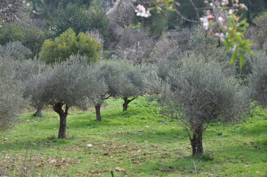 Jardin de Gethsémani