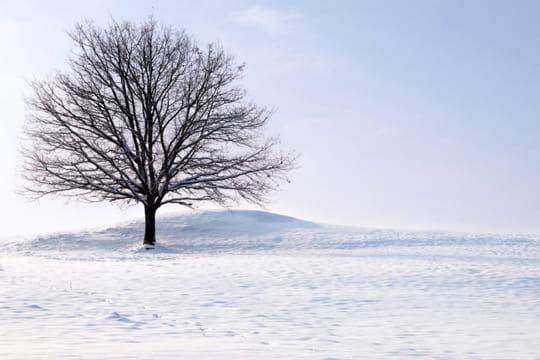 Le thème Janvier 2012 Arbre-neige-769041