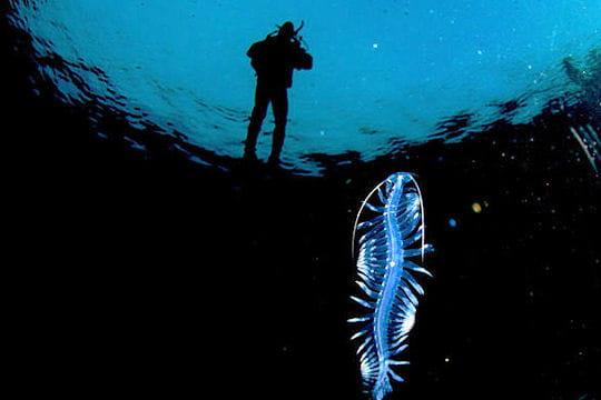 Biodiversité marine