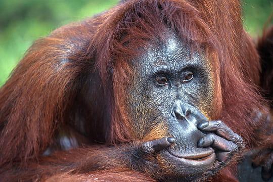 10 forêts en danger (article sous chaque photo) Insulinde-780336