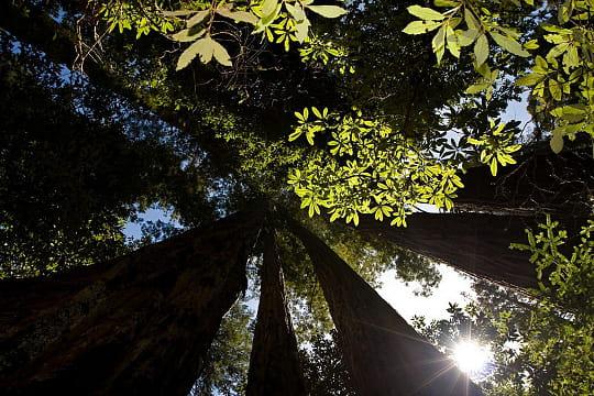 10 forêts en danger (article sous chaque photo) Californie-780393