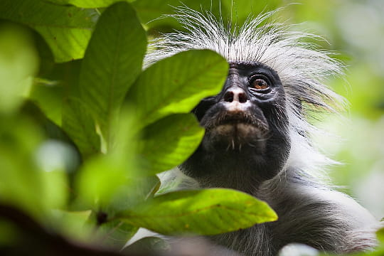 10 forêts en danger (article sous chaque photo) Afrique-l-est-780396