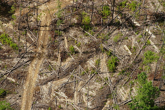10 forêts en danger (article sous chaque photo) Madagascar-780398