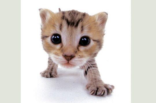 Bouilles - Image de chaton trop mimi ...