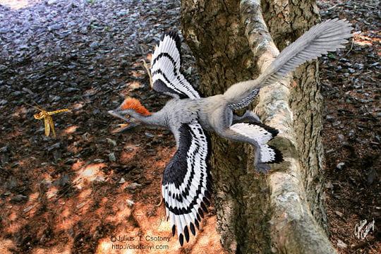 SUJET PHARE : EVOLUTION OU CREATION ? 2eme PARTIE  - Page 37 Dinosaure-a-plumes-790763