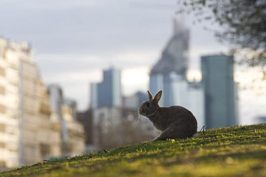 Les lapins colonisent les espaces verts un safari photo for Les espaces verts urbains